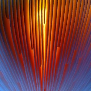 Onderkant van een vliegenzwam met de zon erachter. Categorie abstract.