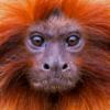 Ook in de dierentuin kijkt dit aapje me indringend aan.