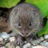 Jonge woelmuis is zich van geen gevaar bewust maar let wel op.