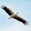 Soms vliegen ze even een rondje. Op 1 sept waren ze allemaal vertrokken, op wintervakantie naar het zuiden.