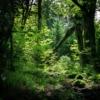 De bossen zijn, met de juiste lichtval ook erg mooi.
