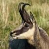 De dieren waren niet erg schuw zo vroeg in de morgen. Je kon er met een 600mm objectief ook een portret van maken.