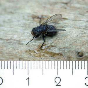 Met de Canon 500D voorzetlens ingezoomd tot 600 (220 mm) krijg je op 30 cm afstand een beeld met een breedte van 31 mm, hiermee kun je prima de kleinere insecten fotograferen.